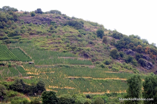 We cruised past entire mountainsides covered in vineyards, some almost 800 years old.