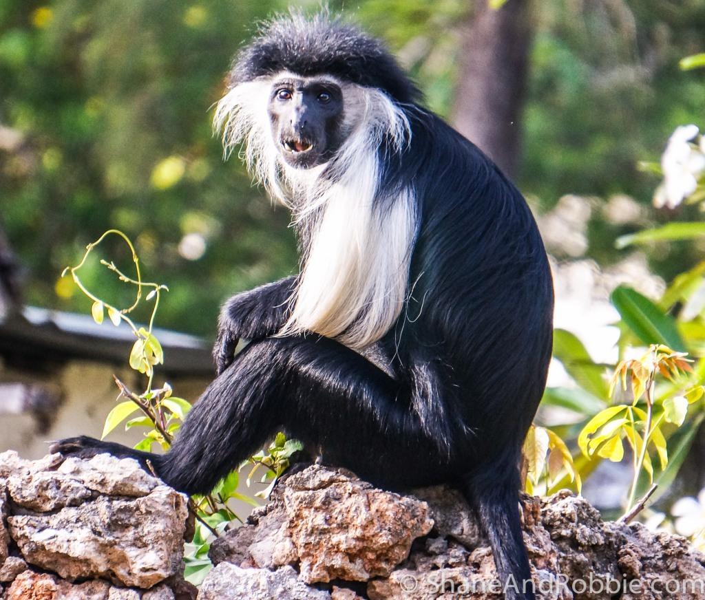 Monkeys-4