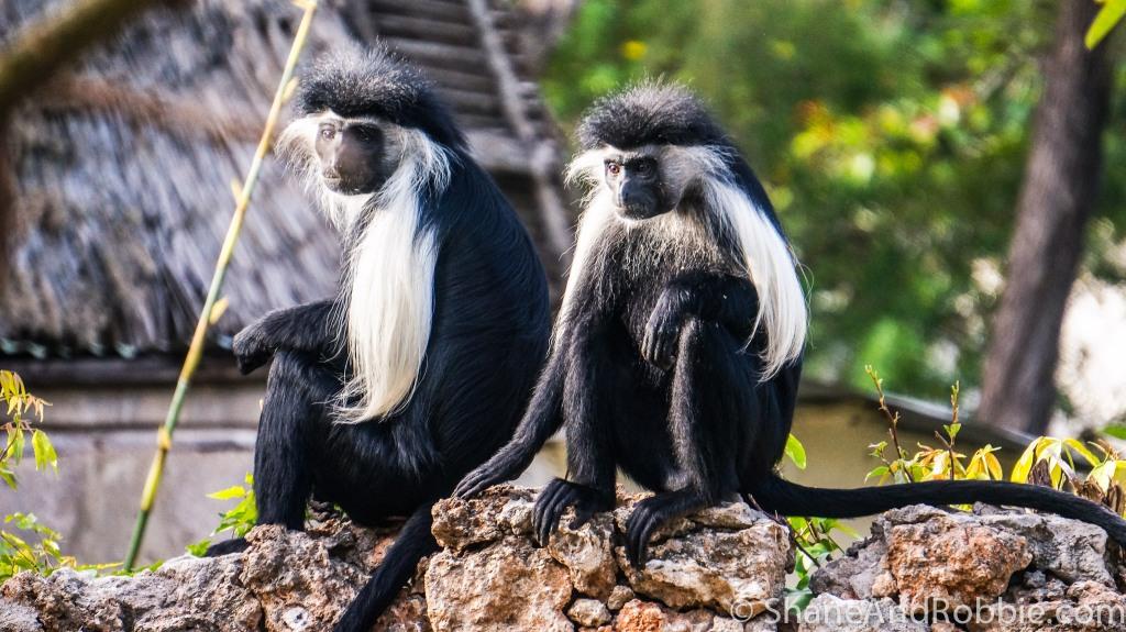 Monkeys-5