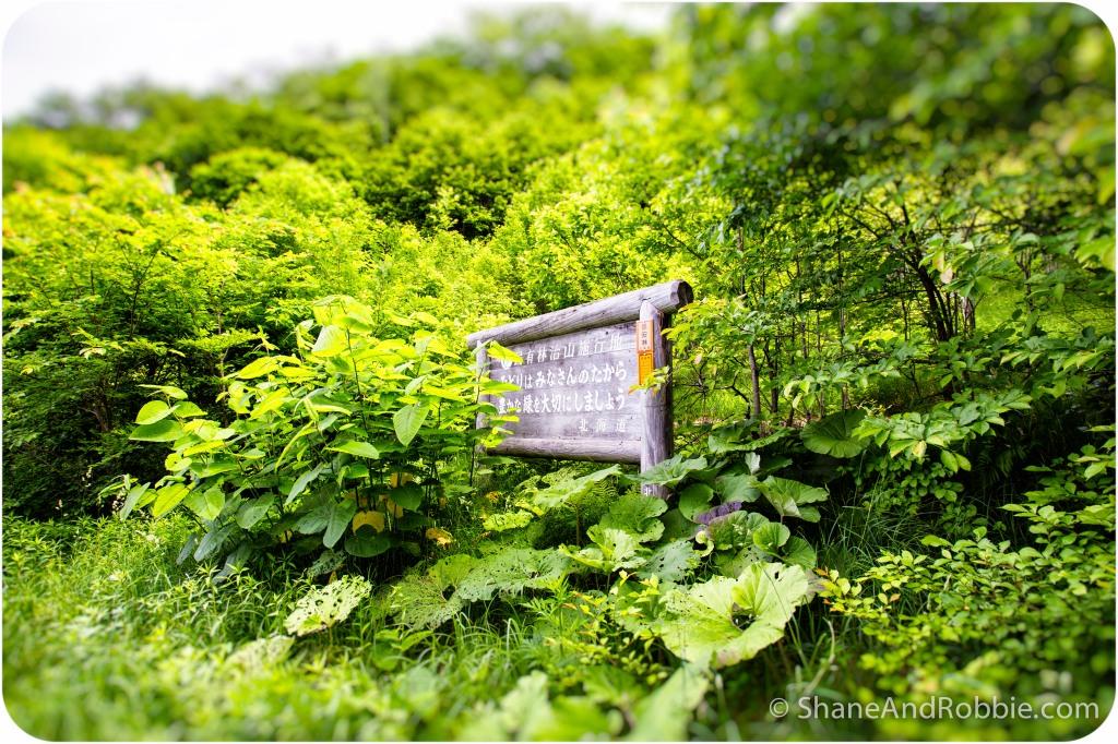 2014-06-20-20140620-00011(Canon EOS 6D)