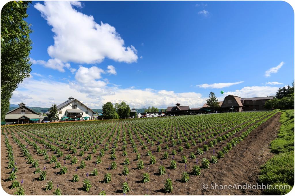 2014-06-20-20140620-00023(Canon EOS 6D)