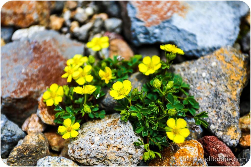 2014-06-21-20140621-00019(Canon EOS 6D)