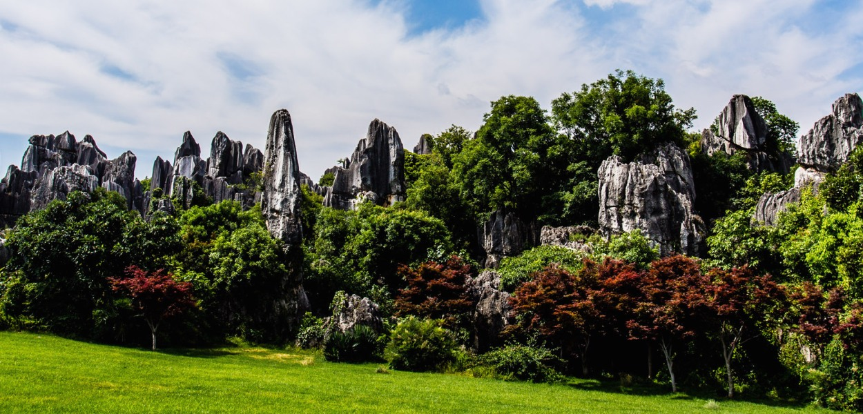 DAY 44 - The Stone Forest